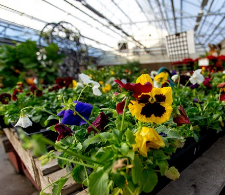 Little Valley Wholesale Nursery